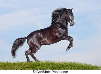 黒, 種馬