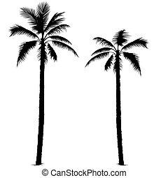 1, シルエット, ヤシの木