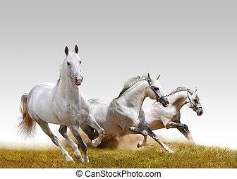 3, 種馬
