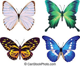 4, 蝶, カラフルである