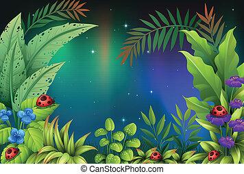 5, 虫, 熱帯雨林