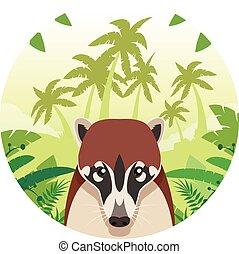 coati, ジャングル, 背景