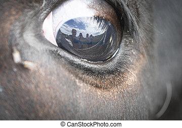 cow's, の上, 目, それ, 終わり, 飛ぶ
