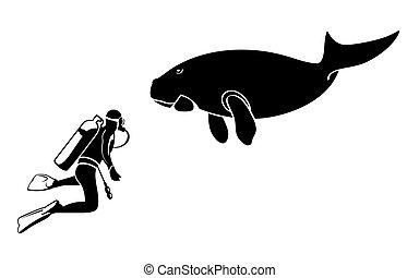dugong, スキューバ ダイバー