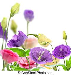 eustoma., カラフルである, 咲く