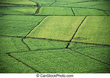 fields., 航空写真, 収穫