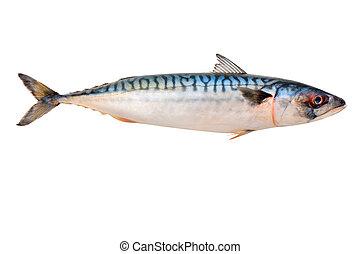 fish, サバ