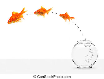 fishbowl, 逃げる, 3, goldfishes