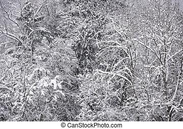 forest., カバーされた, 雪, 光景