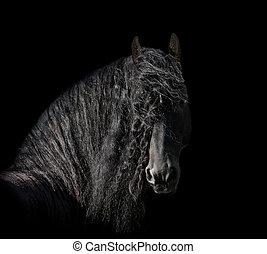 friesian, 種馬