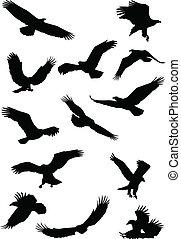 fying, ワシのシルエット, 鳥