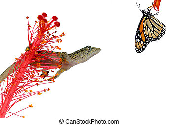 gecko, 獲物