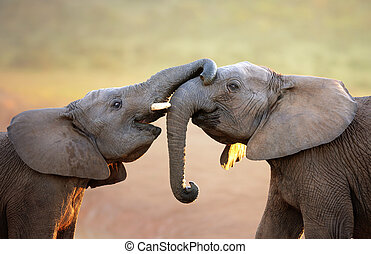(greeting), 象, 穏やかに, 感動的である, 他, それぞれ