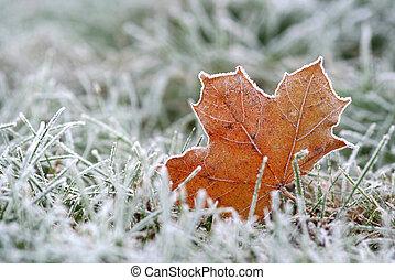 hoar-frost