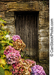 hortensia, 骨董品, ドア, 木製である