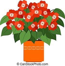 impatiens, ポット, 家の 植物, 花