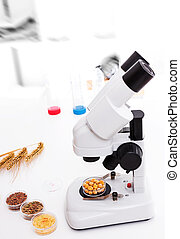 microbiological, 実験室, 選択, 種, 主題