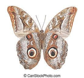 moth, フクロウ