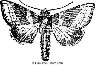 moth, 彫版, 型