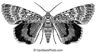 moth, underwing