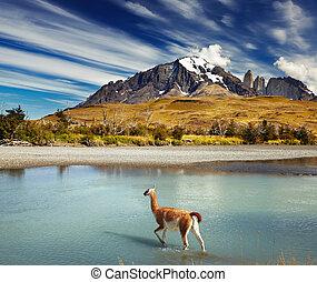 paine, torres, 国立公園, del, チリ