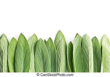 salvia, セージ, officinalis., leaves.
