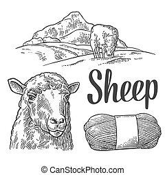 sheep, 彫版, 牧草地, 型, イラスト, ベクトル, yarn.