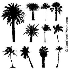 silhouettes., 編集, コレクション, ベクトル, ヤシの木, 容易である, size., (どれ・何・誰)も