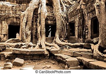 ta, 木, 寺院, カバー, プロム, 巨人