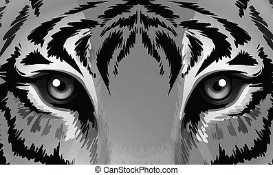 tiger, シャープ, 目