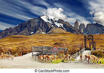 torres, チリ, paine, 公園, del, 国民