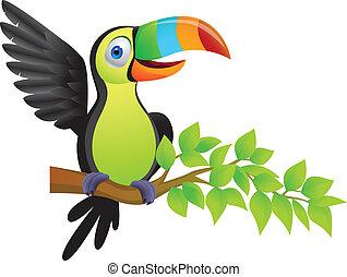 toucan, 鳥