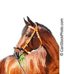 trakehner, 肖像画, 驚かせること, spainish, ホールター, 種馬