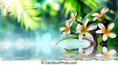 zen 庭, frangipani